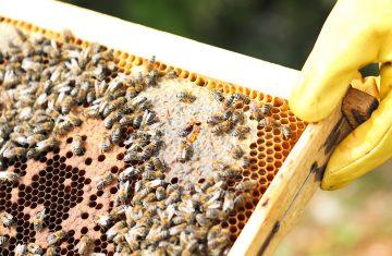 Bee Unique: H Παγκόσμια Ημέρα της Μέλισσας έφτασε! – Γιατί πρέπει να το γιορτάσεις