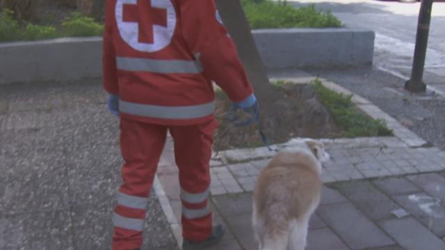Ερυθρός Σταυρός: Εθελοντές φροντίζουν τα κατοικίδια όσων νοσούν από κορωνοϊό